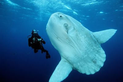 Major Marine Habitats and Geographic Zones Information