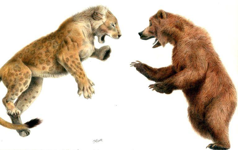 cave lion versus cave bear