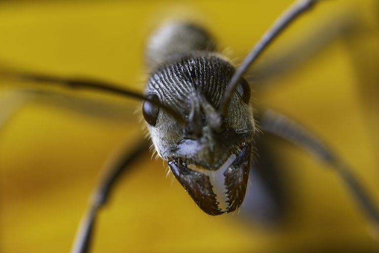 A close-up photo of an ant