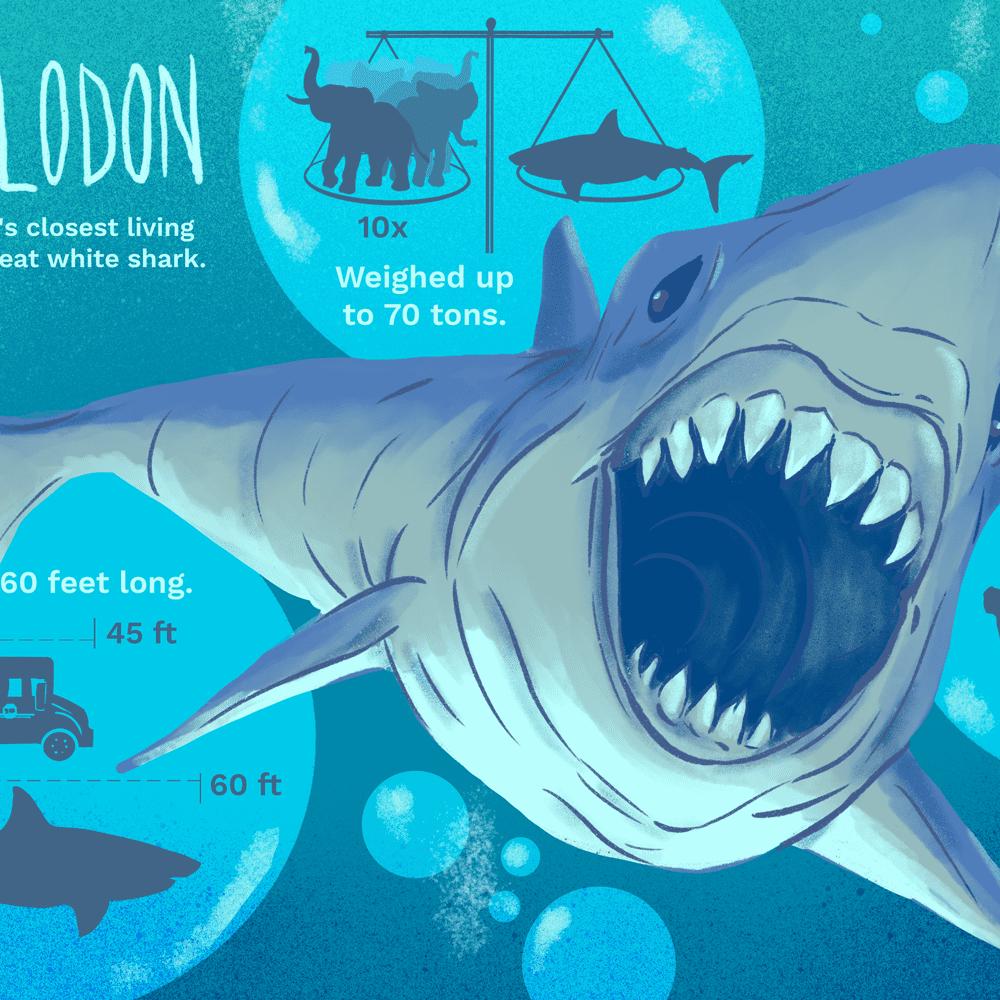 Bull Shark Vs Great White Shark Who Would Win - How Great ...