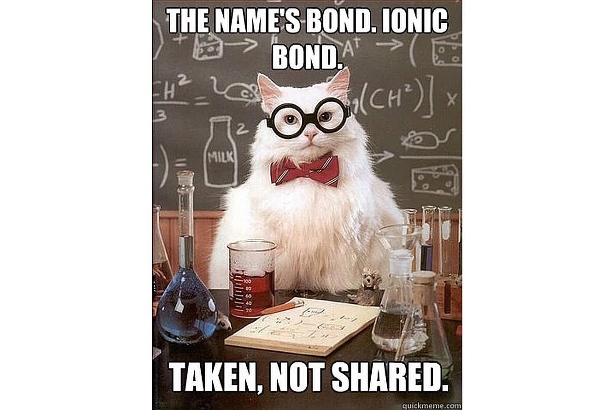 Chemistry Cat forms a strong bond.