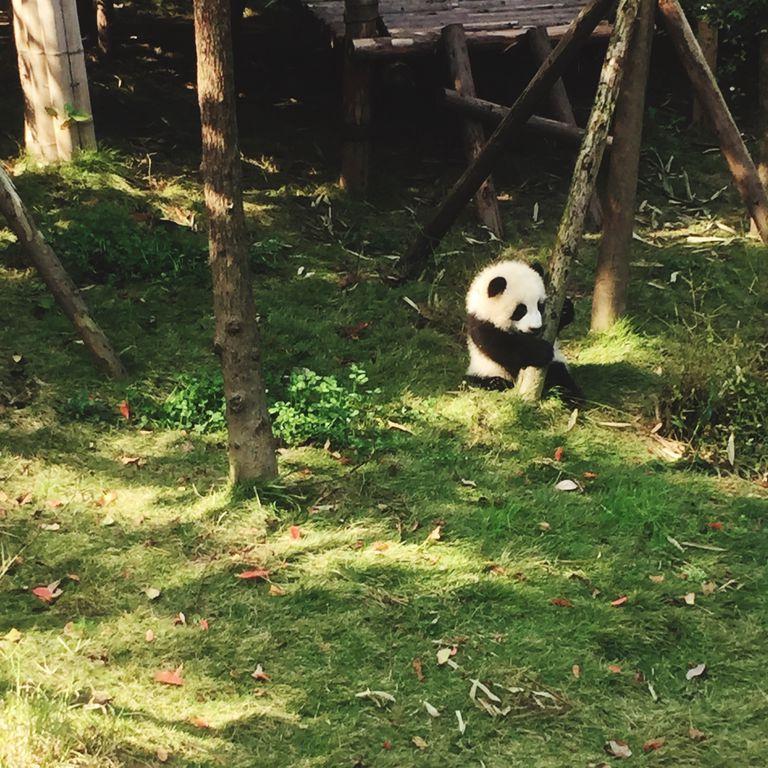 View Of Panda At Zoo