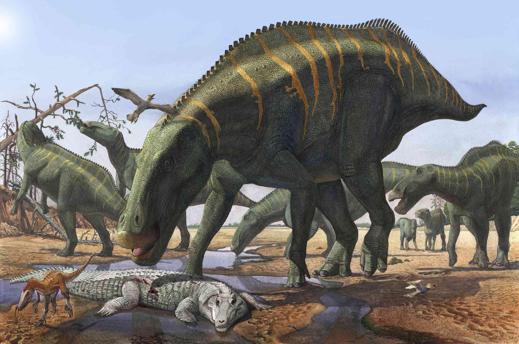 A herd of Shantungosaurus dinosaurs scavenging for food.