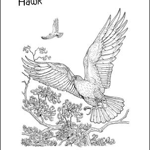 birdcolor 56afda553df78cf772c96b03