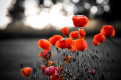 Quotes for remembrance day poignant quotes for armistice day mightylinksfo