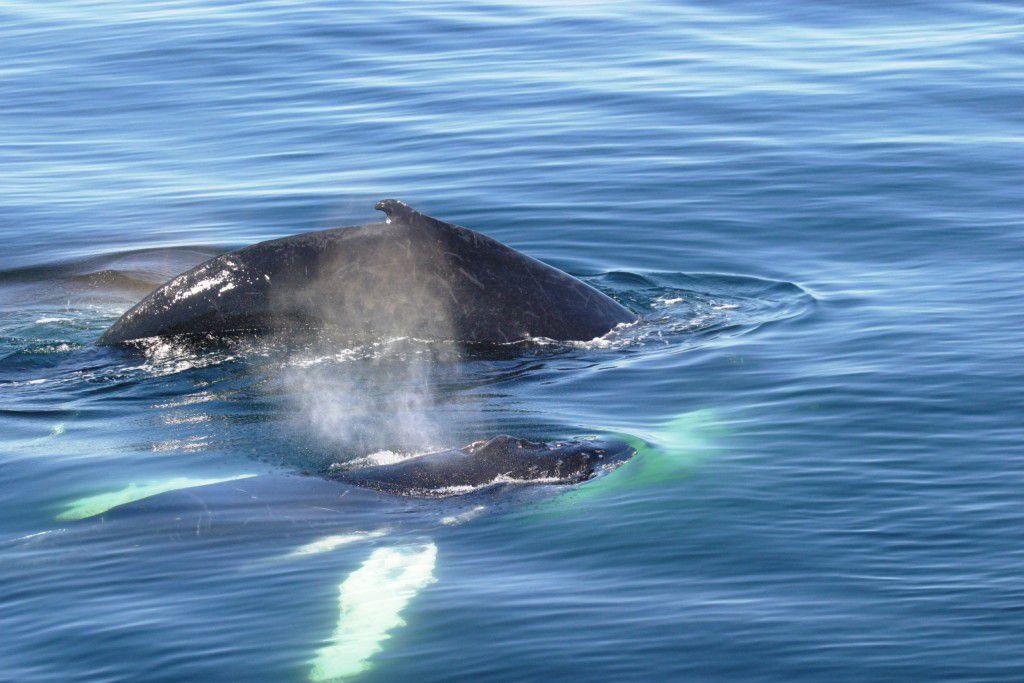 как рождаются киты фото попытался навести порядок