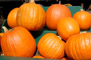 Pumpkins displayed at a roadside stand.