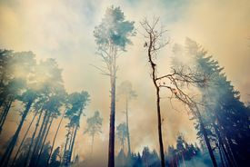 Low Angle View of Smoke Amidst Trees