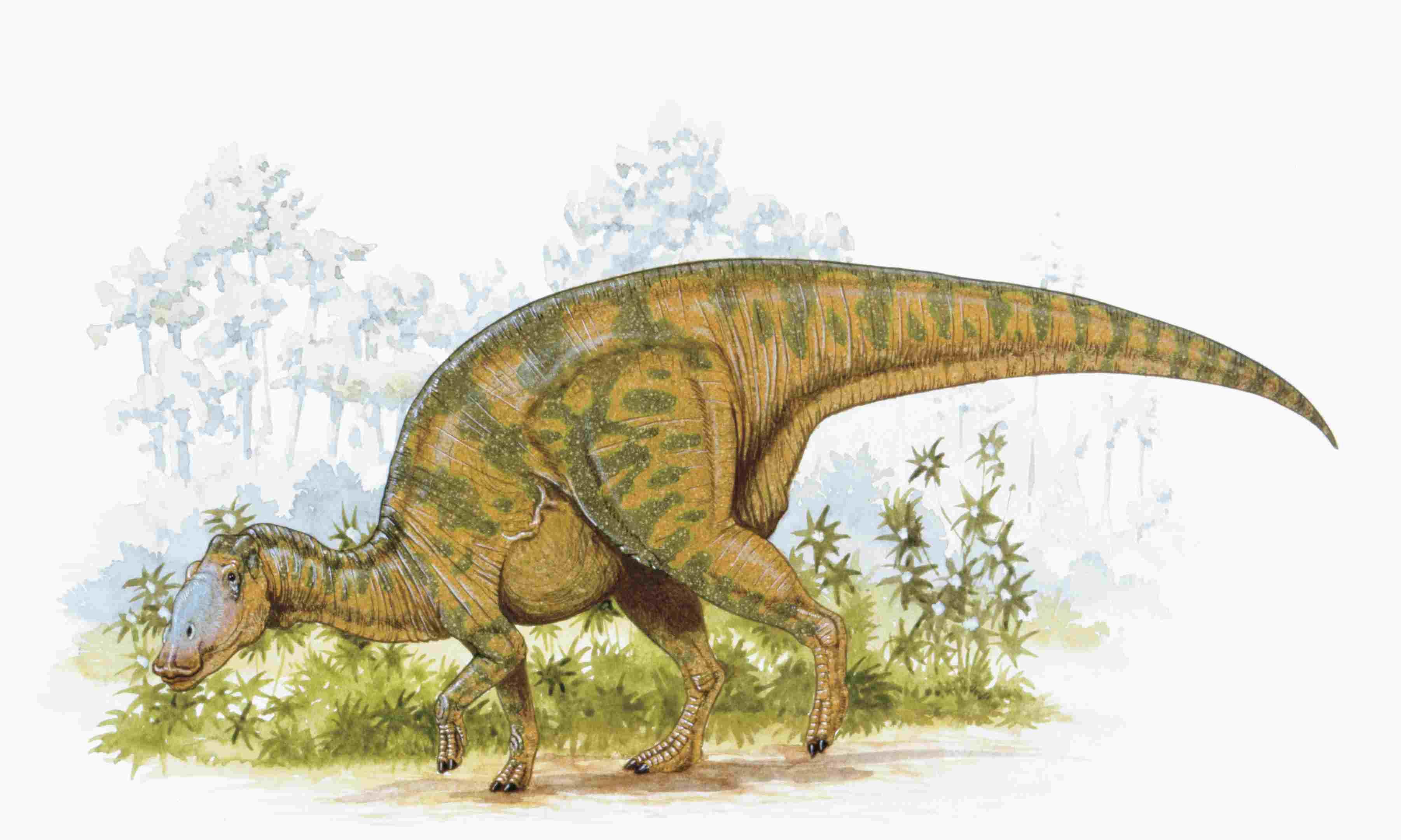 Illustration of Hadrosaurus