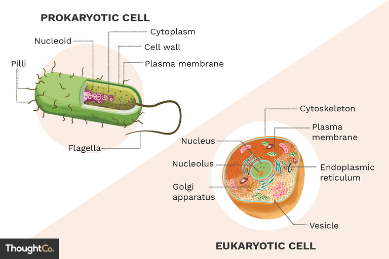 Illustration depicting a prokaryotic cell and a eukaryotic cell, with their important features labeled.