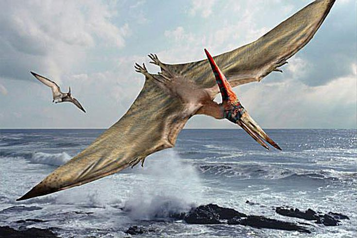 10 Interesting Facts About Pterodactyls