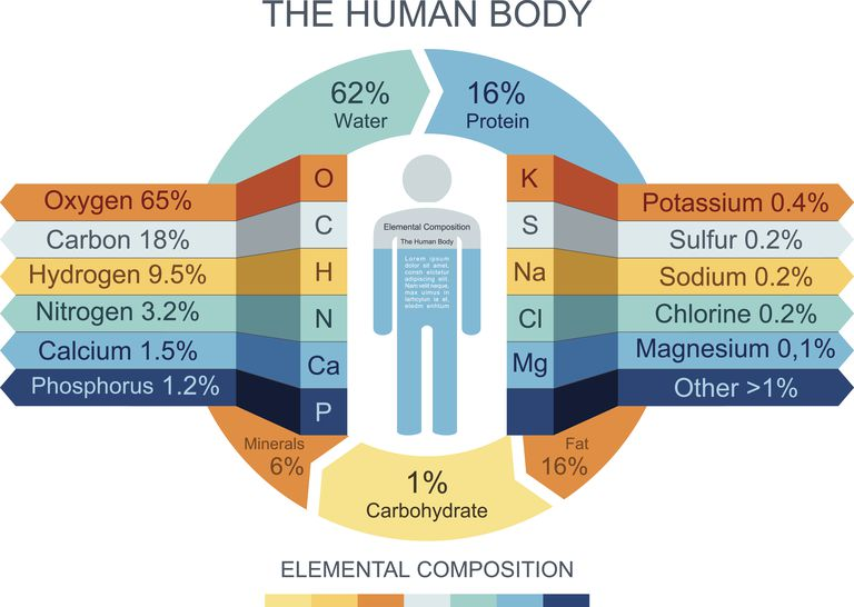 Most of the human body consists of water, which is made from hydrogen and oxygen.