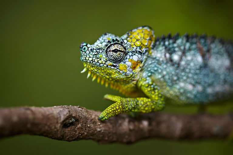 This chameleon is one of millions of animal species alive today.