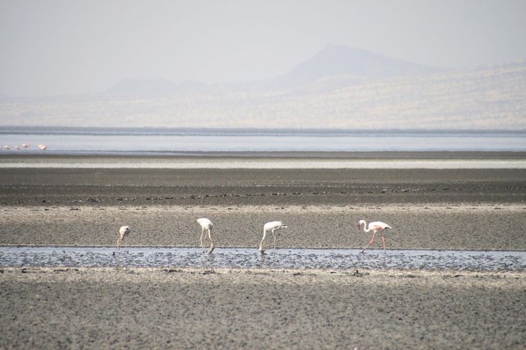 Flamingoes at Lake Natron
