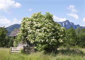 The Bush surname has a straightforward origin, meaning one who lived near a bush.