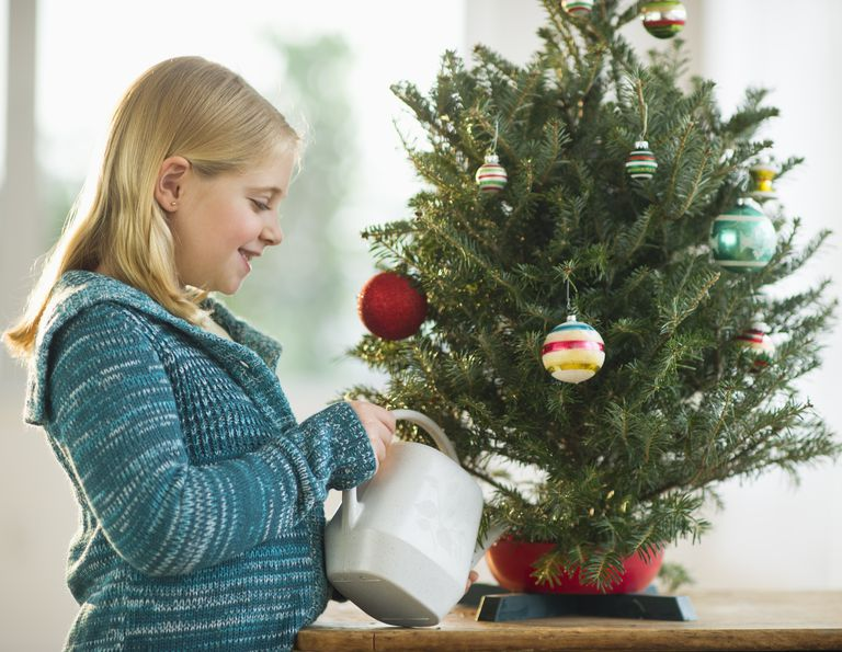 Non toxic christmas tree food solutioingenieria Image collections