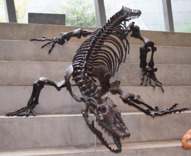 A skeleton of a giant monitor lizard is posed on a flight of stairs